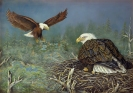Nest Builders on Eagle Flowage