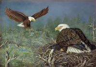 Nest Builders on Eagle Flowage